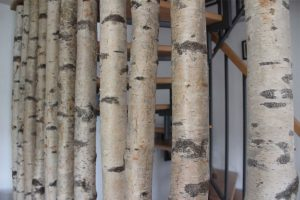 SP Holzträume Raustrenne Birke